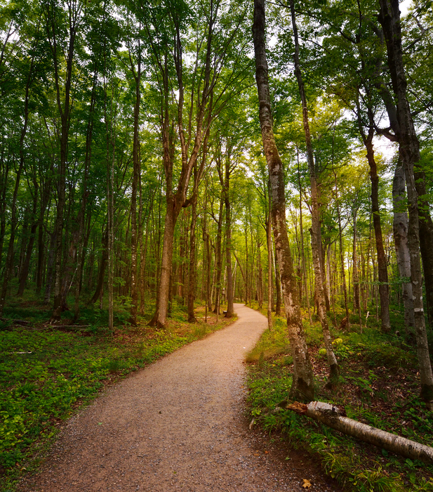 Planning your content path